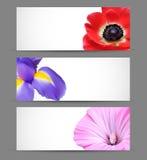 Frühlingsblumen-Hintergrundauslegung Lizenzfreie Stockfotos