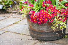 Frühlingsblumen im Fass Stockbild