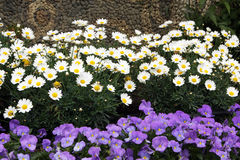 Frühlingsblumenbeete Stockbild