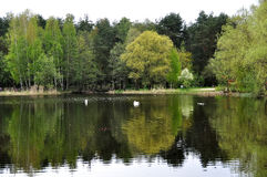 Frühlingsfluß mit Reflexion Lizenzfreie Stockbilder
