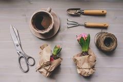 Frühlingsgartenvorbereitungen Hyazinthenblumen und Weinlesewerkzeuge auf Tabelle, Draufsicht Stockfotos