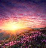 Frühlingslandschaft mit dem bewölkten Himmel und der Blume Stockbild