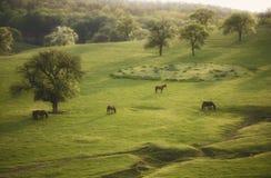 Frühlingslandschaft mit Pferd und Bäumen auf Wiese Lizenzfreies Stockfoto