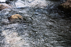 Frühlingsnebenflussschmelzwasser Stockfotografie