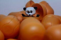 Fri-älska björnen arkivfoton