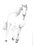 fri häst Arkivfoton