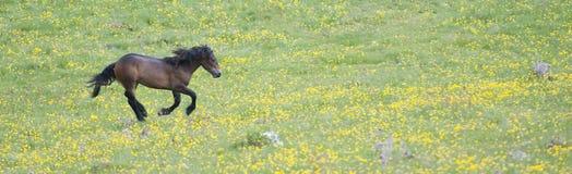 fri häst Arkivbild