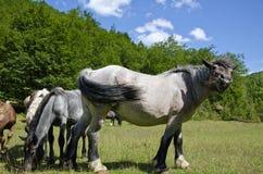 Fri häst i berg royaltyfri fotografi