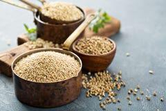 Fri matlagning för gluten med quinoaen royaltyfri fotografi