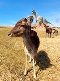 Fri-ströva omkring hjortar i dinosaurie parkera med vulkan royaltyfria foton