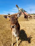 Fri-ströva omkring hjortar i dinosaurie parkera med vulkan royaltyfri bild