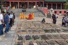 Fria captive djur-klosterbroder ceremonier Arkivfoton