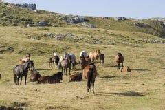 fria hästar Arkivbilder