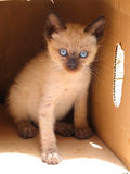 fria kattungar Royaltyfri Fotografi