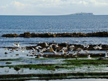 fria seagulls Royaltyfri Foto