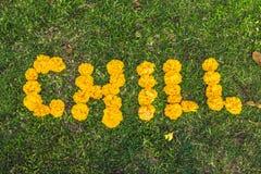 Frialdad de la inscripción en la hierba Flores amarillas fotos de archivo libres de regalías