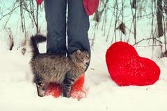 Fricção do gato contra os pés fêmeas Imagens de Stock