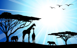 África/safari - silhuetas Imagem de Stock