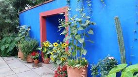 Frida Kahlo Art trädgård, livdel 2 14 Royaltyfri Fotografi