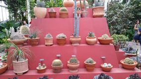 Frida Kahlo sztuka, ogród, życia część 2 21 Zdjęcie Stock