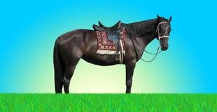 fridfull häst Arkivbilder