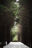 Fridfull skog med endast snowfall Arkivbilder