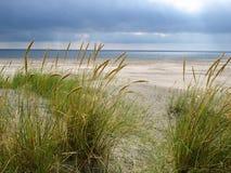 fridfull strand royaltyfri foto