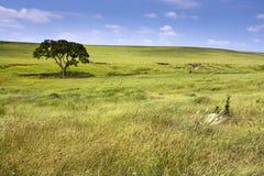 Fridfullt naturlandskap av den midwest Kansas Tallgrass präriesylten Royaltyfri Fotografi