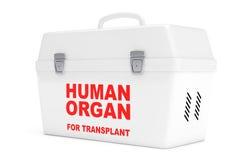 Fridge Box for transporting Human Donor Organs. 3d Rendering Stock Image