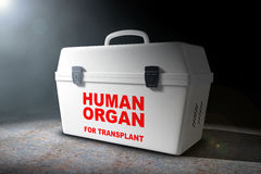Fridge Box for transporting Human Donor Organs in the volumetric Stock Photos
