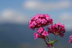 Fridsam blomma arkivbild