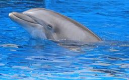 Fridsam delfin Royaltyfri Fotografi