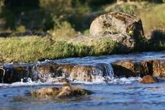 fridsam flod royaltyfria foton