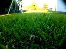 Fridsam gräsmatta arkivbilder