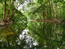 Fridsam grön natur med tyst damm- och trädreflexion i vatten Royaltyfri Fotografi