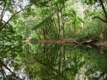 Fridsam grön natur med tyst damm- och trädreflexion i vatten Royaltyfri Bild