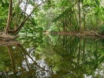 Fridsam grön natur med tyst damm- och trädreflexion i vatten Royaltyfria Bilder