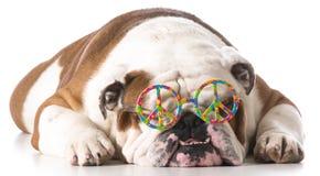 fridsam hund Arkivbilder