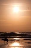 fridsam lätt morgon Arkivfoto