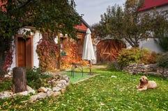 Fridsam lantlig nyanserad höstträdgård med hunden royaltyfri bild