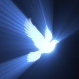 Fridsam ljus signalljus för duvafågel vektor illustrationer