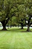 fridsam park arkivfoto
