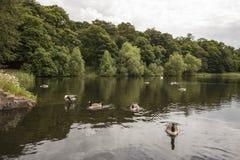 Fridsam sikt över sjön på Nostell priorskloster Royaltyfri Foto