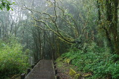 Fridsam skog Royaltyfri Fotografi