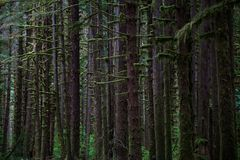 Fridsam skog i olympisk nationalpark royaltyfri bild