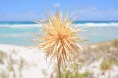 Fridsam strand med växten i brännpunkt Arkivbild