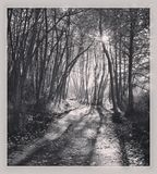 Fridsam svartvit skogslinga - Royaltyfria Foton