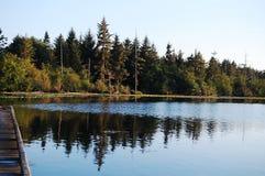 Fridsam tranbär sjö Royaltyfria Foton
