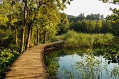 Fridsam väg mellan träd och vatten Fotografering för Bildbyråer