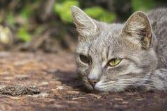 Fridsamma Cat Closeup Arkivfoton